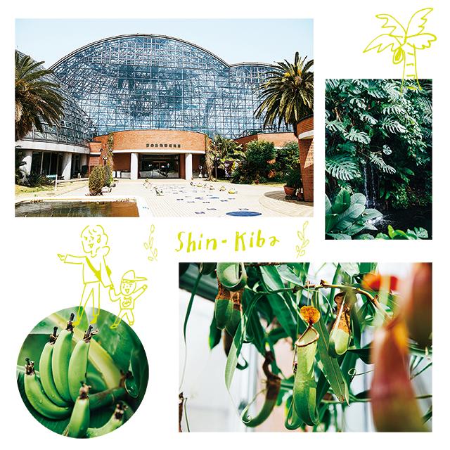 緑に癒される、熱帯植物館[気晴らしに 新木場]