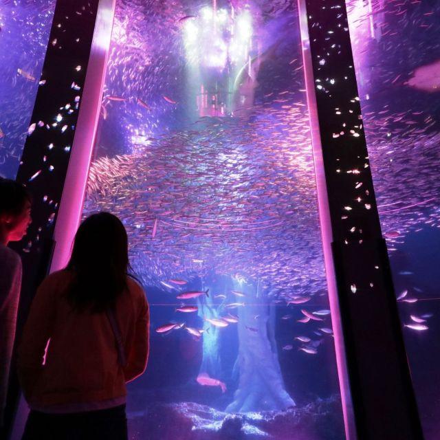 《横浜》水中で生きものたちが演じる桜 八景島シーパラダイス