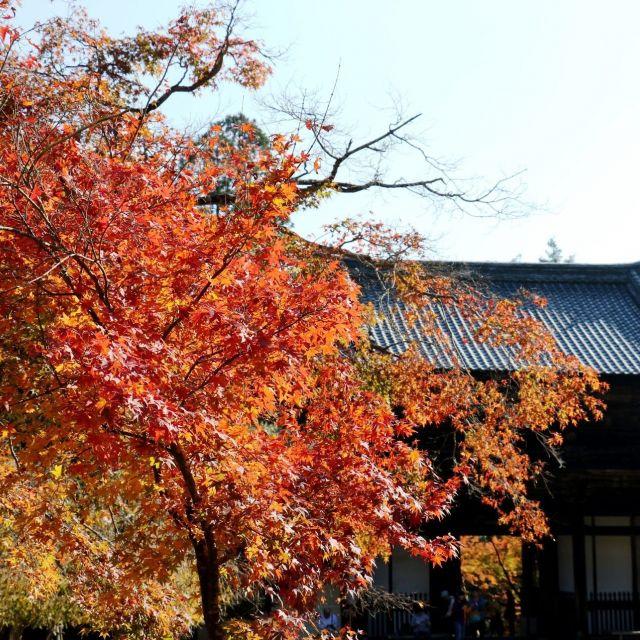 【京都紅葉めぐり2017】①高雄・神護寺 京都で最初に色ずく北の名所