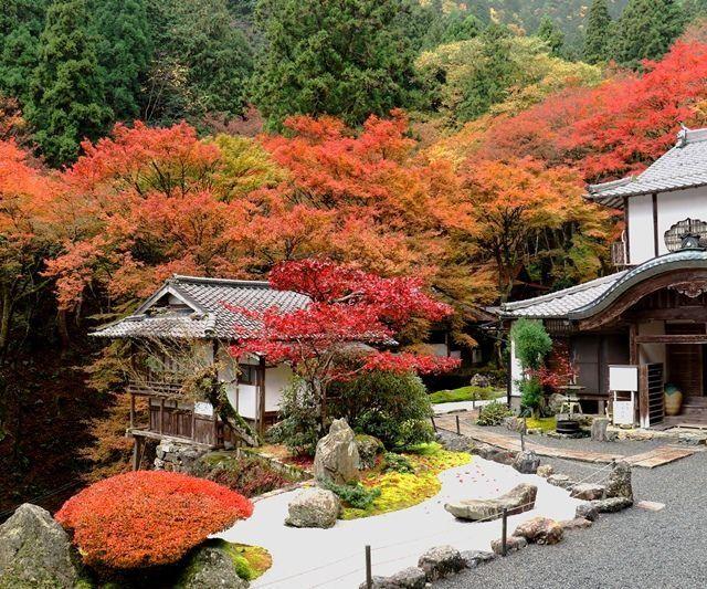 《京都紅葉めぐり2017》④阿弥陀寺