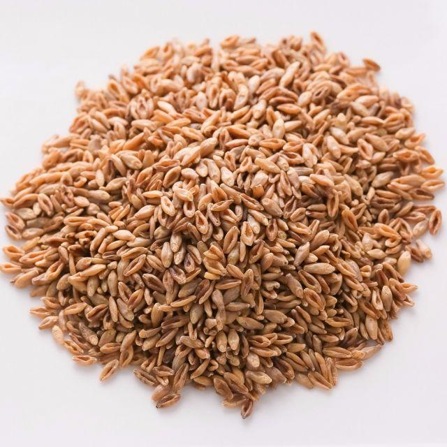 """腸の奥まで届く食物繊維! 今年注目のスーパーフード""""スーパー大麦バーリーマックス""""とは?"""