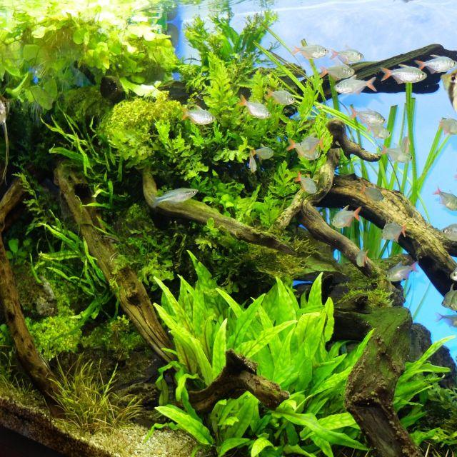 《武蔵小杉》水槽の中の大自然アートで癒されよう! 「グリーンアクアリウム展」開催中