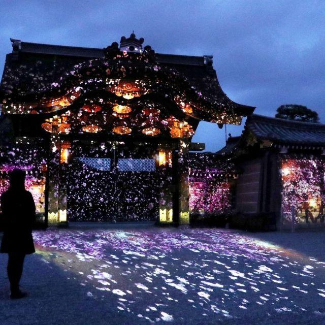 《京都》本物の桜とアートの桜が共演 大政奉還150周年の「二条城」で24日から