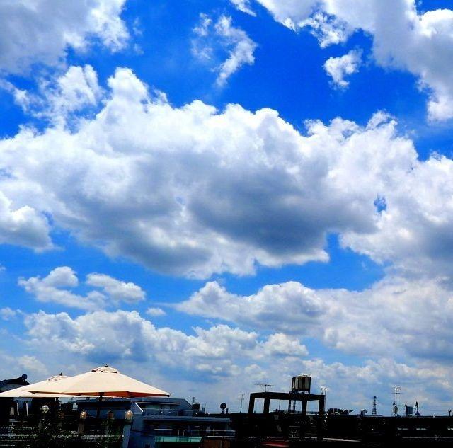 《西荻窪》空を身近に感じられる「ササユリカフェ」で、ランチやティータイムはいかが
