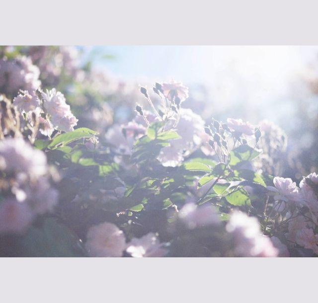 《品川》蜷川実花写真集「うつくしい日々」 「生命をつなぐ」かみしめて