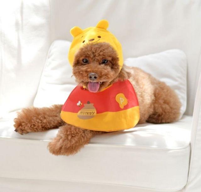 ディズニーストアオリジナルのペットグッズ登場 ミッキーやプーさんの帽子で愛犬がさらに可愛く